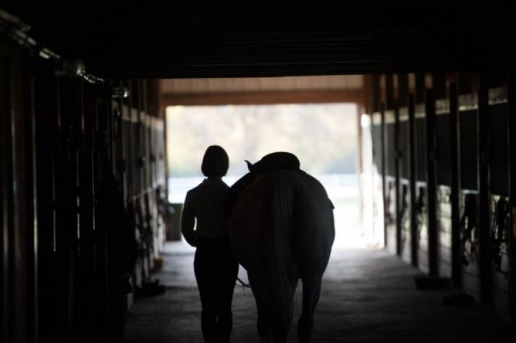 A quiet moment in the stable